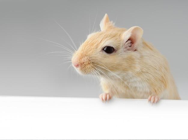 Kleine muis houdt witte banner vast