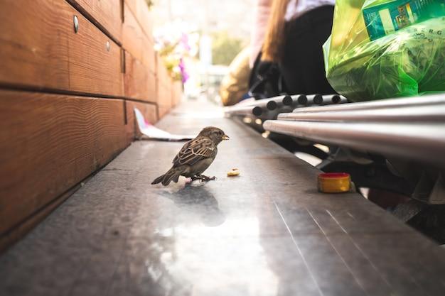 Kleine mus die brood eet van mensen op straat. trieste en eenzame vogel op straat vol mensen