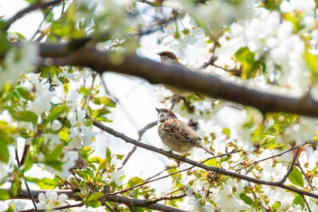 Kleine mus zittend op een bloeiende tak