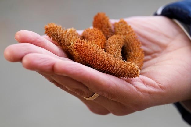 Kleine naaldkegels om in de palm van je hand te houden