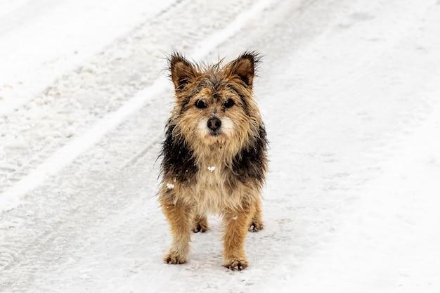Kleine natte hond op een besneeuwde weg