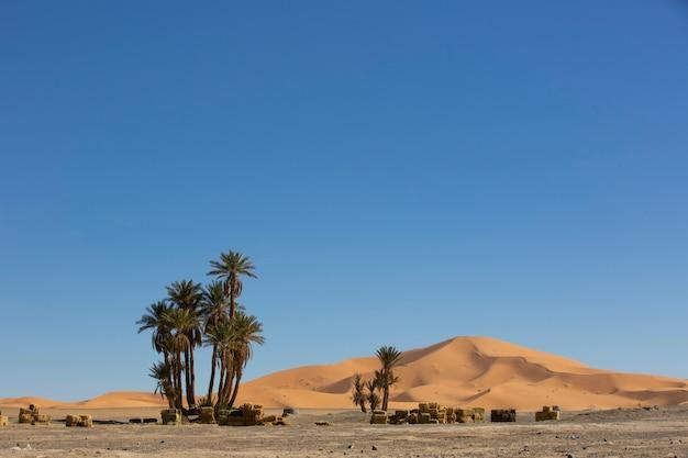 Kleine oase in de saharawoestijn