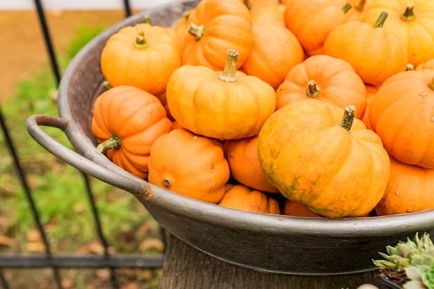 Kleine oranje pompoenen in metalen mand. rustieke stijl. stall op boerenmarkt.