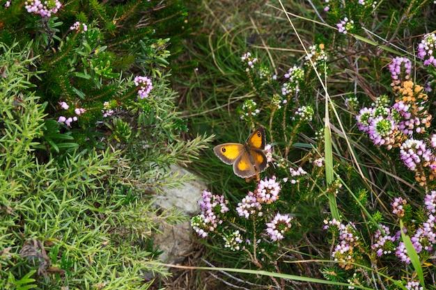 Kleine oranje vlinder dichtbij bloemen