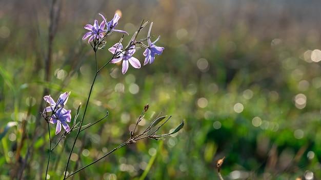 Kleine paarse bloemen sluiten zich op bij tegenlicht