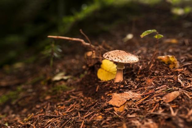 Kleine paddestoel in het bos