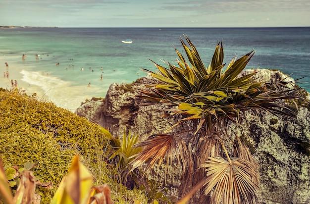 Kleine palmboom groeit tussen de rotsen van een afgrond aan de zee bij tulum in mexico.