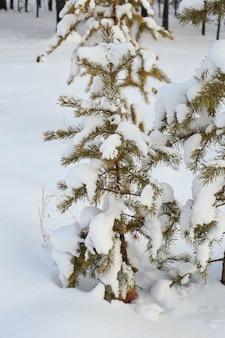 Kleine pijnboom bedekt met sneeuw