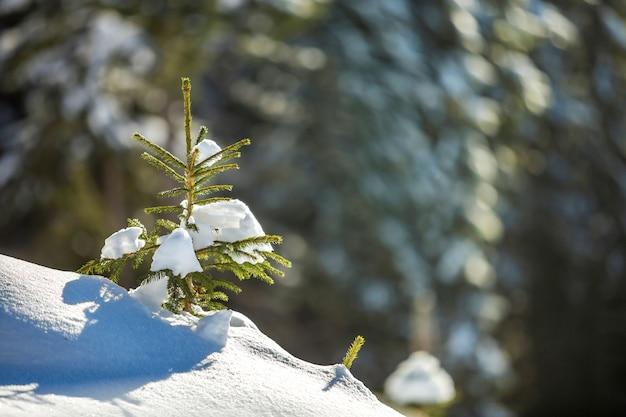 Kleine pijnboom met groene naalden bedekt met diepe verse schone sneeuw op wazig blauwe kopie ruimte achtergrond. prettige kerstdagen en gelukkig nieuwjaar wenskaart.