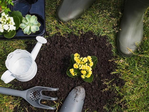 Kleine plant groeit in de bodem
