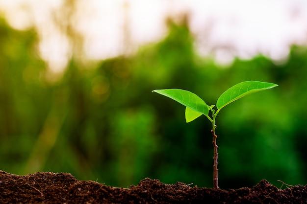 Kleine plant groeit in de ochtend.