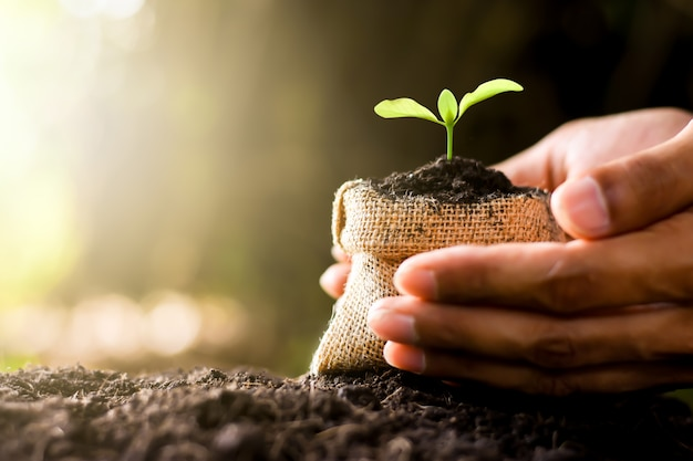 Kleine plant groeit in doek zak