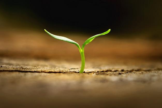 Kleine plant groeit in het ochtendlicht