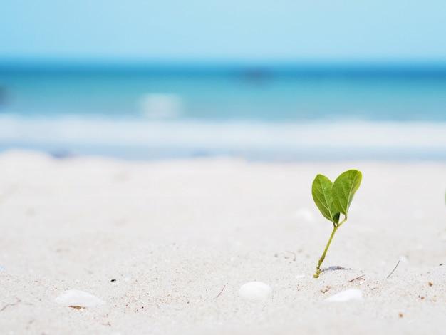 Kleine plant groeit met blad hartvorm op het strand.
