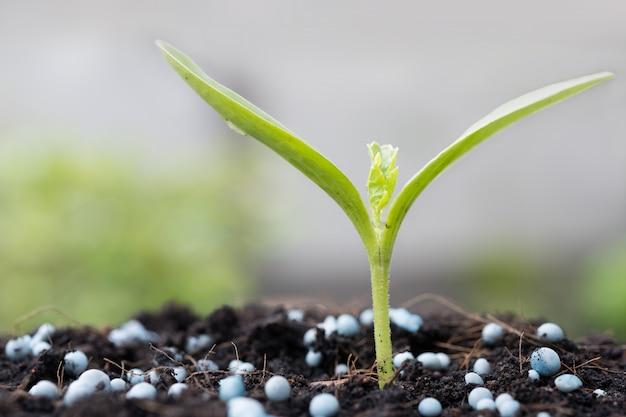 Kleine plant groeit uit de grond met kunstmest