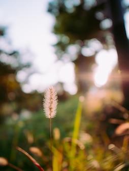 Kleine plant in de herfst met vage achtergrond