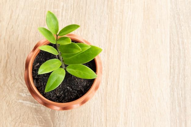 Kleine plant in een bruine pot