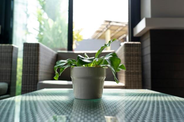 Kleine plant in een keramische beker voor decoratie.