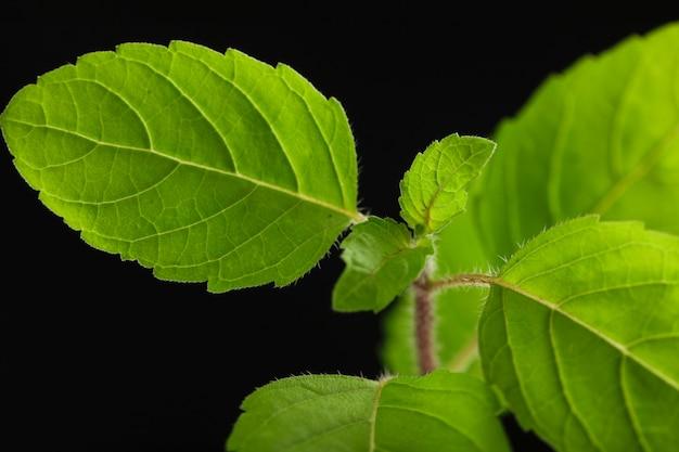 Kleine plant op donkere achtergrond