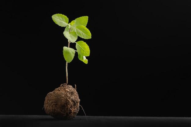 Kleine plant op zwart