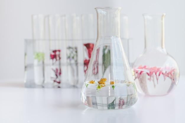 Kleine planten in reageerbuis voor onderzoek naar biotechnologische geneeskunde.