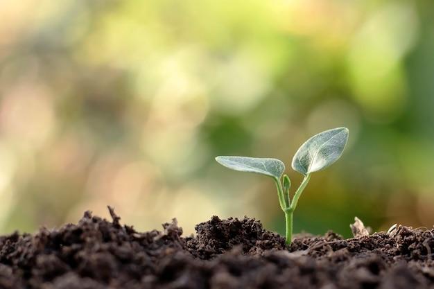 Kleine planten met groene bladeren die groeien op natuurlijke grond en een groene natuurachtergrond vervagen het concept van landbouw en duurzame plantengroei.