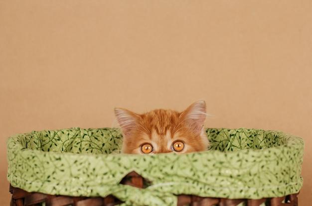 Kleine pluizige gember kitten gluurt uit een rieten mand