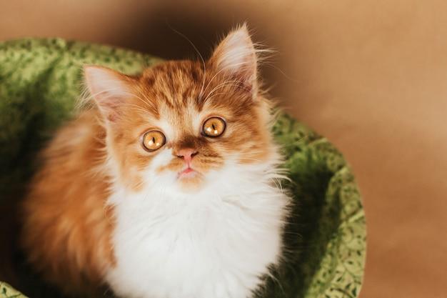 Kleine pluizige gember kitten zit in een groene mand op een lichtbruine achtergrond