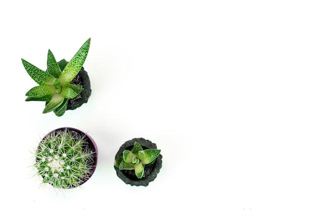 Kleine potplanten en cactus op witte achtergrond