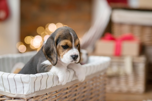 Kleine pup in de mand