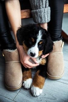 Kleine pup van berner sennenhond op handen van modieus meisje met een mooie manicure. dieren