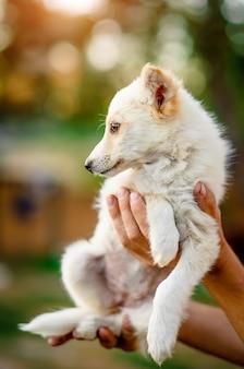 Kleine puppy hand in hand