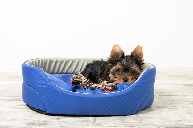 Kleine puppy ligt in een kamer in een hondenmand met speelgoed