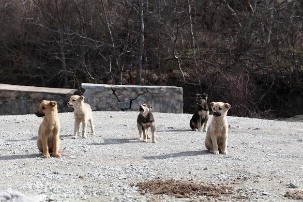 Kleine puppy's hebben zich in een kudde verzameld en bewaken hun territorium. dakloze dieren.