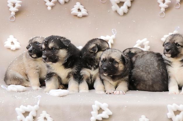 Kleine puppy's op een nieuwjaarsachtergrond