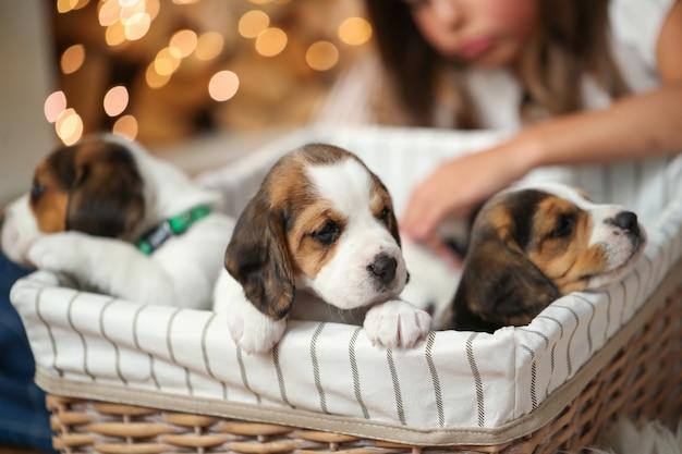 Kleine puppy's