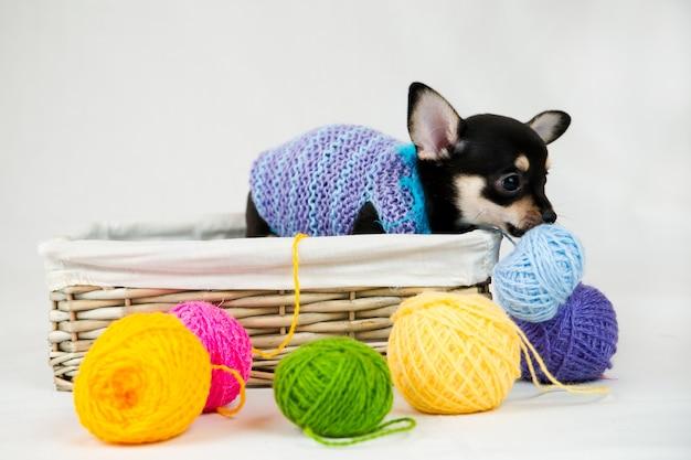 Kleine rasechte puppy geïsoleerd