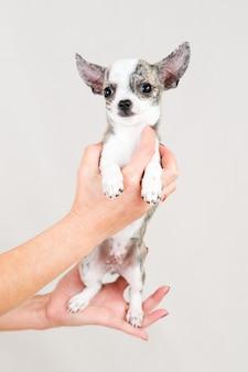 Kleine rasechte puppy op wit