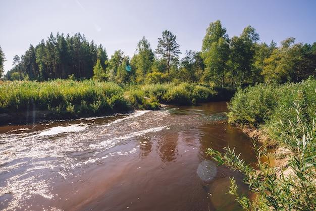 Kleine rivier in bos in zonnige dag