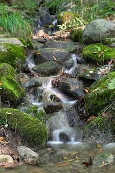 Kleine rivier in het bos
