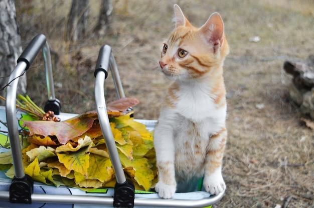Kleine rode kat in een mand op straat met herfstbladeren. kan worden gebruikt voor kalenders, ansichtkaarten.