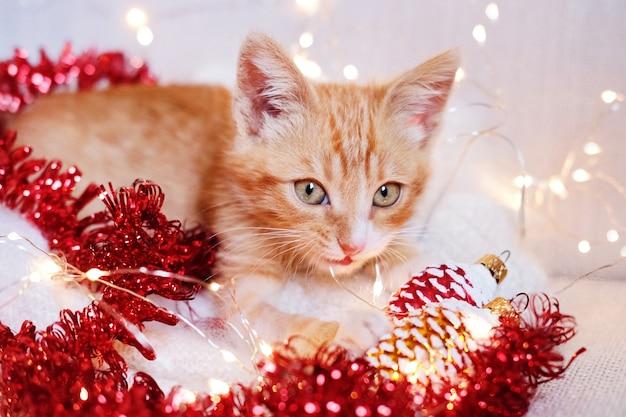 Kleine rode kitten spelen in kerstversiering