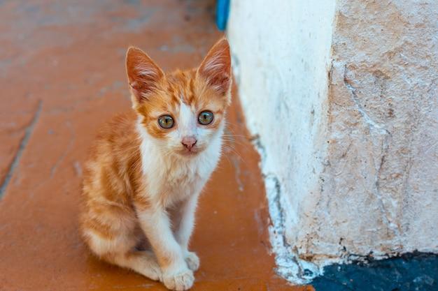 Kleine roodgevlekte kitten bij een witte muur