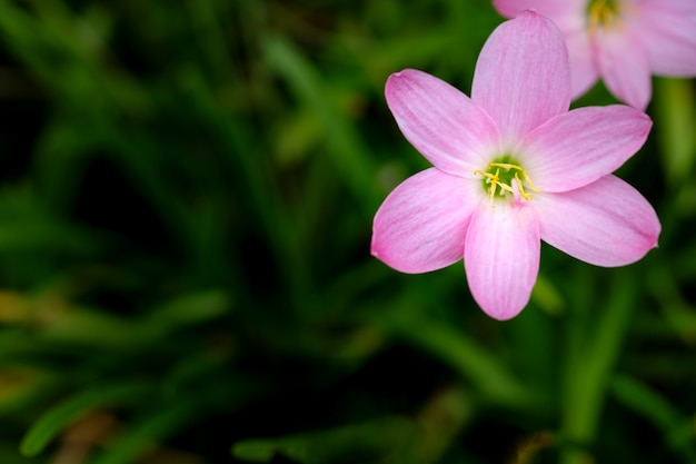 Kleine roze bloemen van groen gebladerte