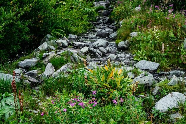 Kleine roze bloemen van wilgeroosje groeien in de buurt van bronwater tussen bont gras. berg helder water stroom tussen stenen en rijke vegetatie. sally in bloei onder hooglandflora. schoonheid van de alpine natuur.
