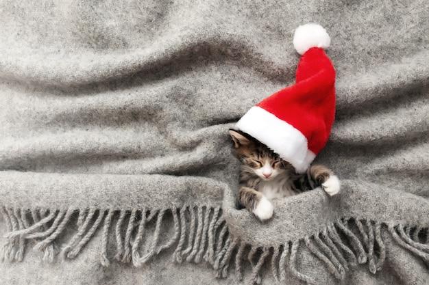Kleine schattige driekleurige kerstkatje in rode kerstmuts of pet slaapt met gesloten ogen en liggend bedekt met een grijze pluizige deken. foto van ontspannen slapende nieuwjaarskat die ondersteboven ligt