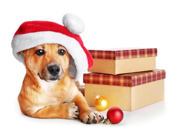 Kleine schattige grappige hond in kerstmuts met dozen en kerstspeelgoed, geïsoleerd op wit