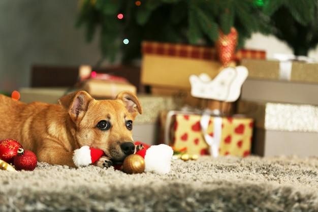Kleine schattige grappige hond spelen met kerstmuts op kerstcadeaus achtergrond
