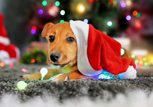 Kleine schattige grappige hond spelen met slinger in kerstmuts op kerstmis achtergrond