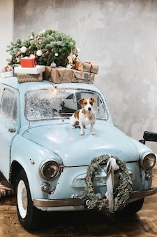 Kleine schattige jack russell terrier hond zit op de motorkap van blauwe retro auto met cadeautjes op het dak